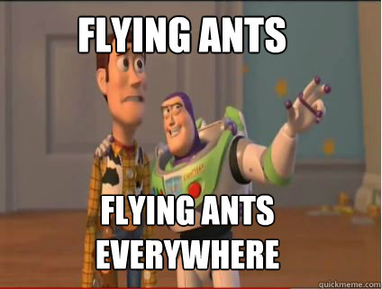 Flying Ants Flying Ants Everywhere Woody And Buzz Quickmeme
