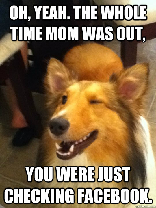 Oh Yeah The Whole Time Mom Was Out You Were Just Checking Facebook Implying Dog Quickmeme