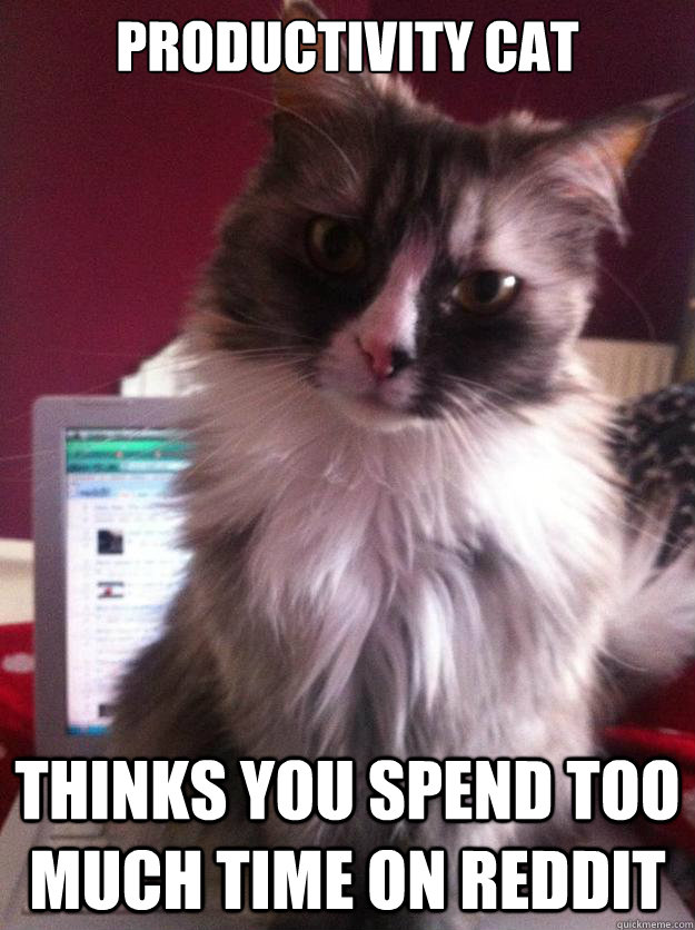 Productivity Cat thinks you spend too much time on Reddit