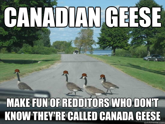 Canadian Geese Make Fun Of Redditors Who Don T Know They Re Called