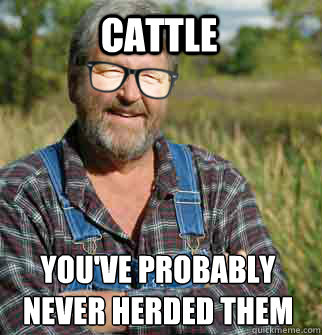 Cattle Youve Probably Never Herded Them Before Hipster