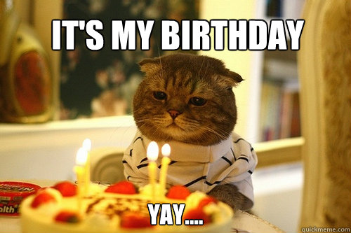 It S My Birthday Yay Birthday Cat Quickmeme Make social videos in an instant: quickmeme