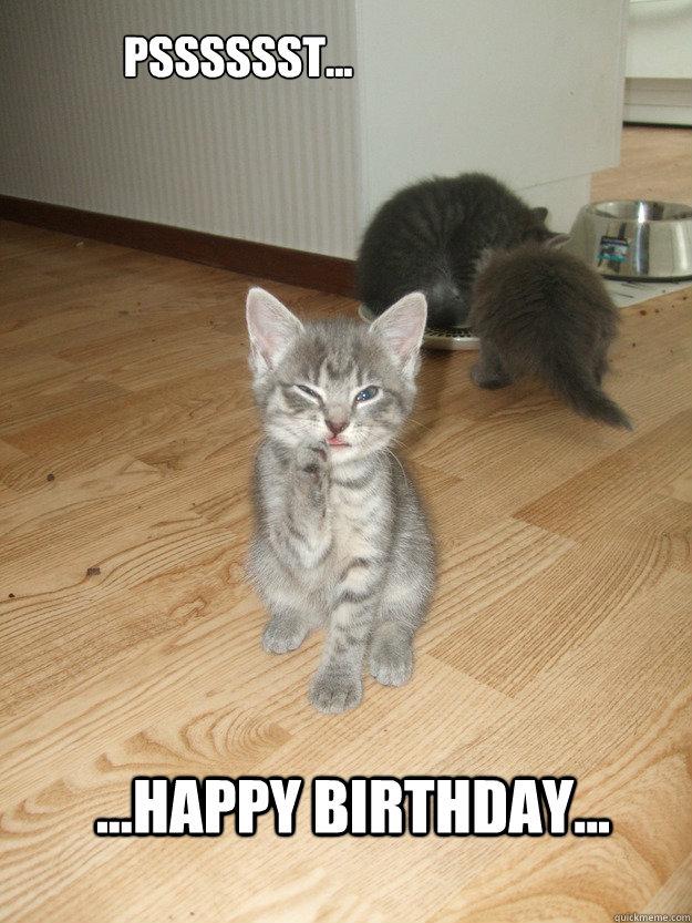 Psssssst Happy Birthday Mischievous Kitten Quickmeme
