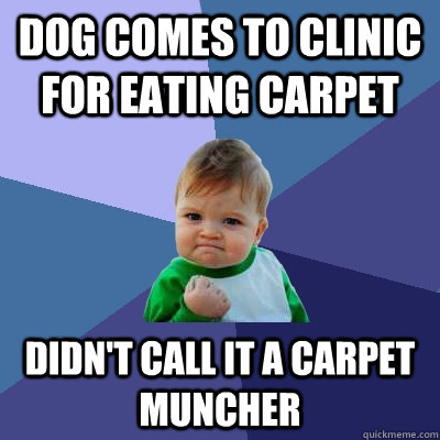 Dog comes to clinic for eating carpet