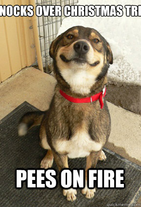 Dog Christmas Tree Meme.Knocks Over Christmas Tree Lights Start Fire Pees On Fire