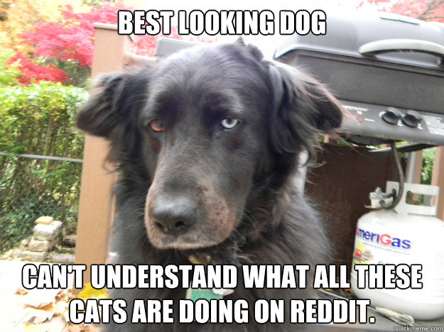 Best looking dog Can't understand what all these cats are