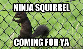Ninja squirrel coming for ya - ninja squirrel - quickmeme