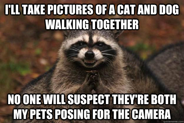 I'll take pictures of a cat and dog walking together No one