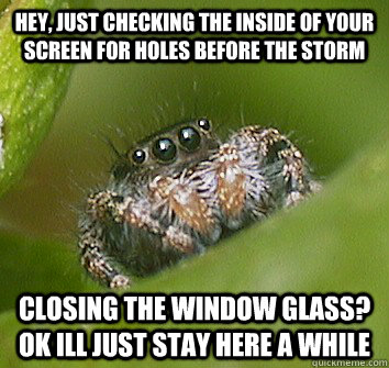 Hey Just Checking The Inside Of Your Screen For Holes Before The Storm Closing The Window Glass Ok Ill Just Stay Here A While Misunderstood Spider Quickmeme