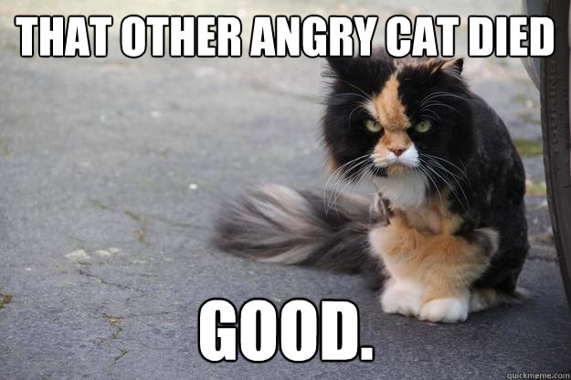 That other angry cat died Good  - Angry Cat - quickmeme