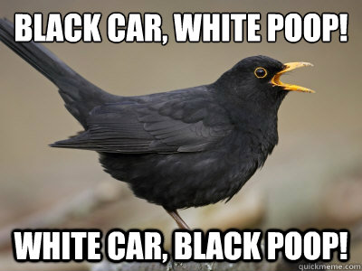 Birds Funny Greek Funny Bird Pictures Funny Greek Quotes