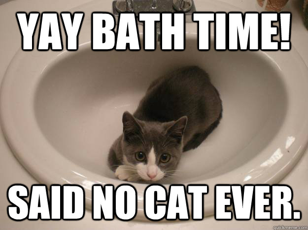 Yay Bath Time Said No Cat Ever Truthful Cat Quickmeme Click on a meme to download the clean version. quickmeme